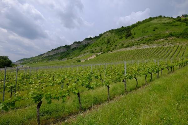 Weinbau-in-Franken